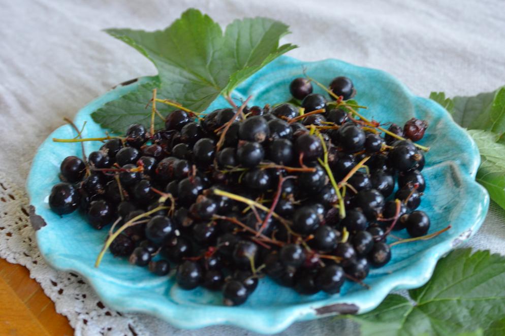 svarta-vinbär-hälsa
