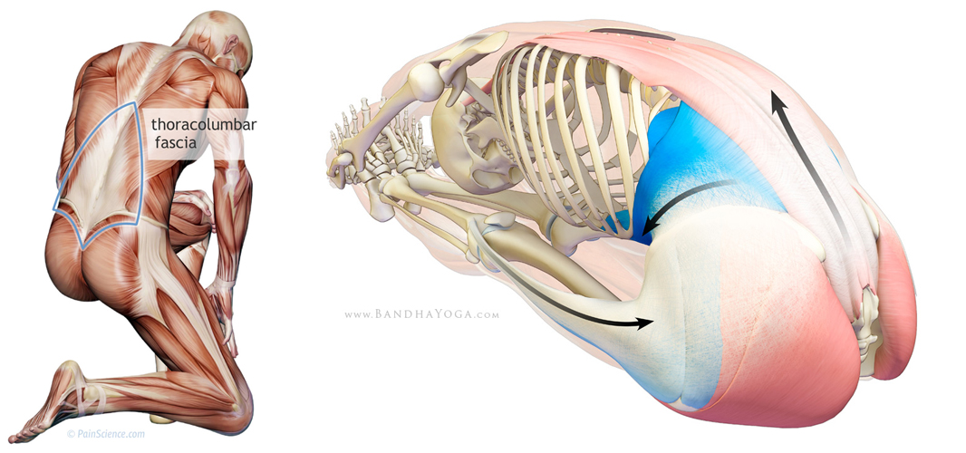 öm i musklerna