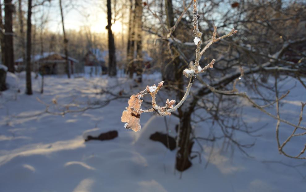 vinter-3-vanliga-villan