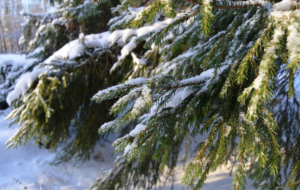 vinter-vanliga-villan