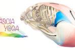 fascia-stressaav-tanja-dyredand-bindvav