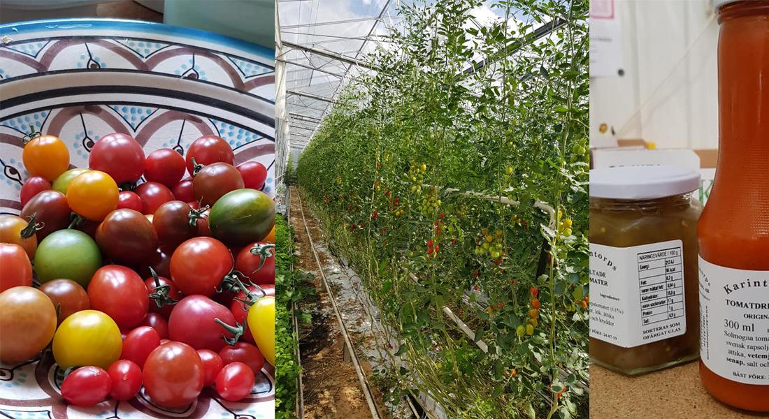 karintorps-tomater-tanja-2018