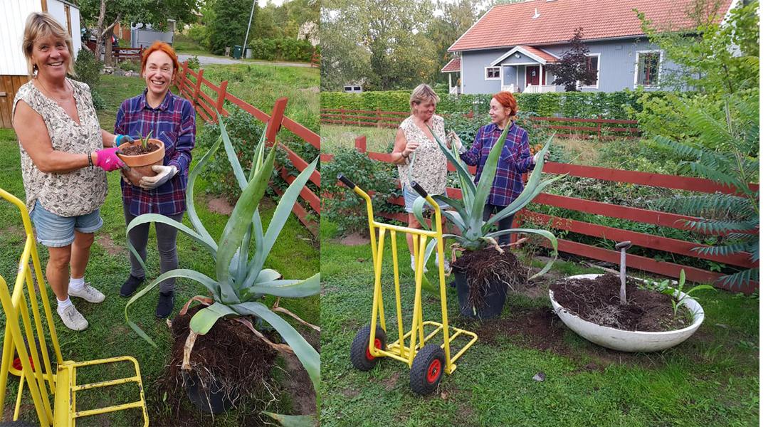 agave-kaktus-edsbro-portugal-mama-gaia